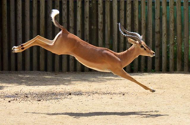 Agile Gazelle